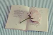 Пишу на заказ стихи,  поздравления