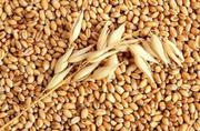 купим рапс  пшеницу  сою  кукурузу  ячмень  подсолнечник