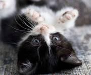 Отдам пушистых котят в хорошие руки в Виннице