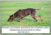 Как оформить собаку для охоты Документы на право охоты с собакой охотн