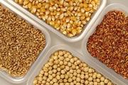Закупаем ячмень,  пшеницу,  горох,  рапс