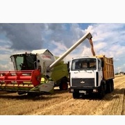 Перевозка зерна по Украине. Услуги зерновозов.