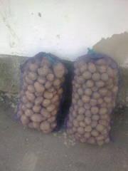 Продам картошку оптом.0984446841 0678469010